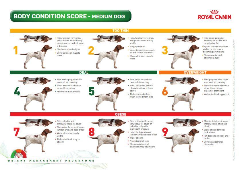 Canine Body Condition Score | Shiba inu | Dogs, Pets, Diy ...