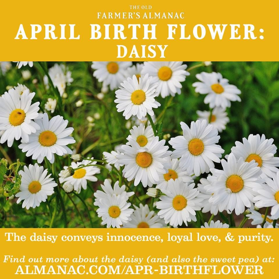 April Birth Flower Birth flowers, April birth flower