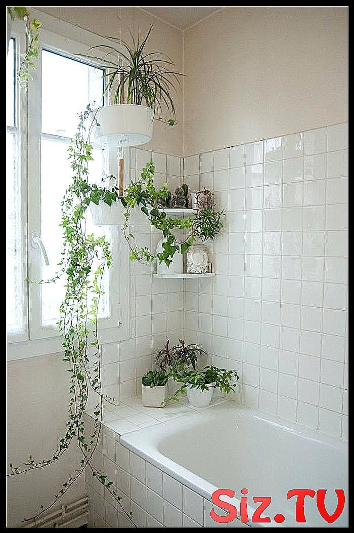 Badezimmer gestalten und dabei eine Tropenoase entstehen lassen gruene pflanzen badezimmer ge ...