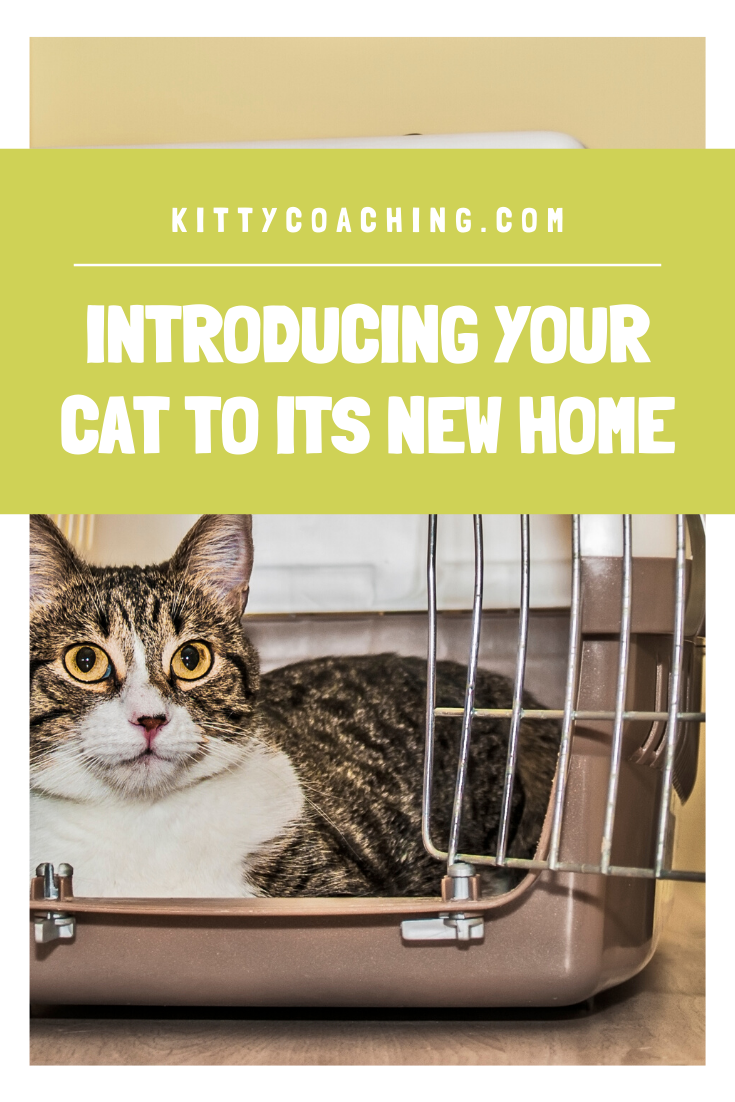 How To Properly Introduce Your Cat To Its New Home 2020 In 2020 How To Introduce Yourself Introducing A New Cat Cats