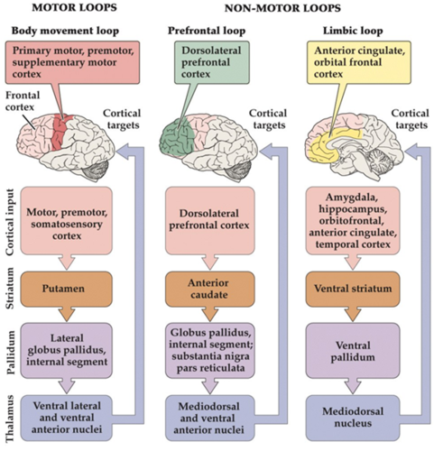 Neurobiology Final03: Motor Control II: Basal Ganglia and