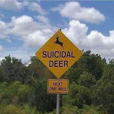 suicidal deer road sign how funny hope those passing are. Black Bedroom Furniture Sets. Home Design Ideas