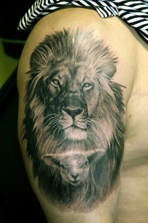 Lion With Sheep Tattoo Some day Tattoos, Lion tattoo, Lamb tattoo
