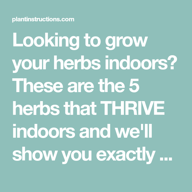 5 Herbs That Thrive Indoors Herbs Indoors Herbs Easy 400 x 300