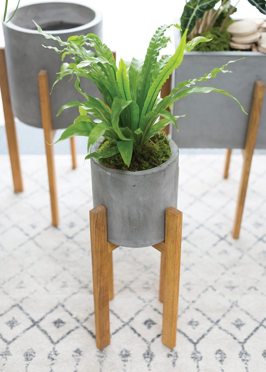 Explore Afloral Com And Find Trendy Cement Plant Stands For Your Home Place A Large Tropical Palm Leaf Plant In This Plants Plant Stand Concrete Planter Molds