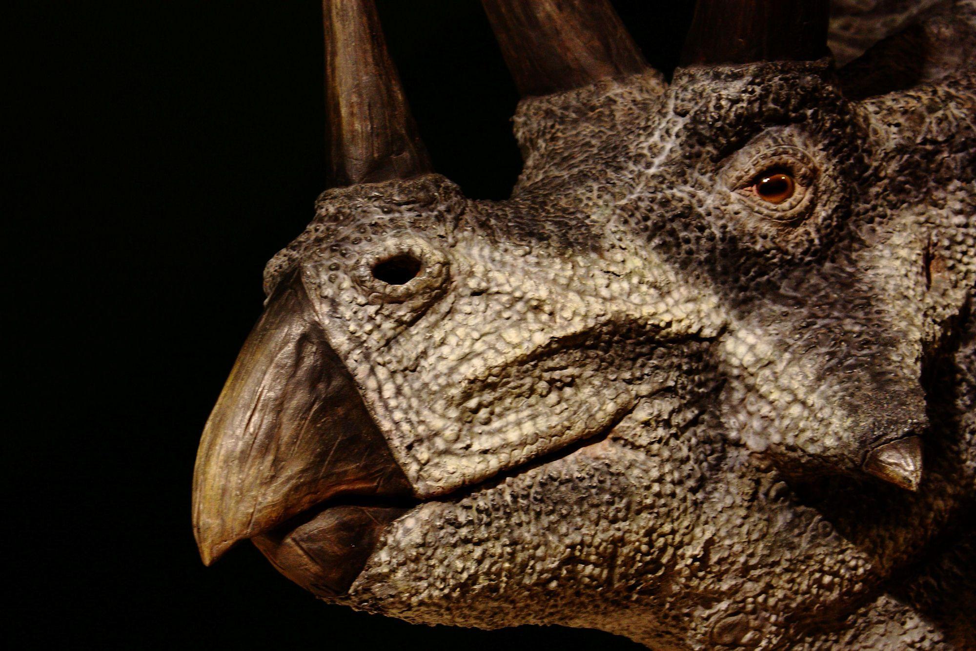 10 Awesome Dinosaur Wallpaper Designs Dinosaur wallpaper