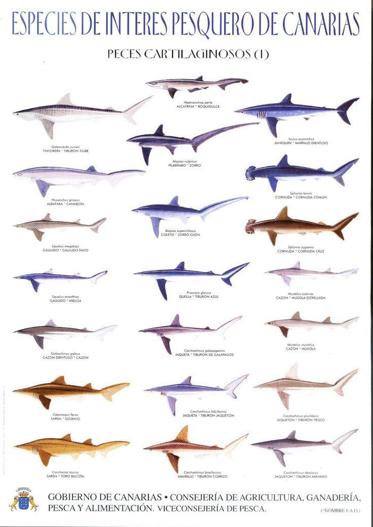 Image result for lanzarote surfing diagram | Lanzarote | Pinterest