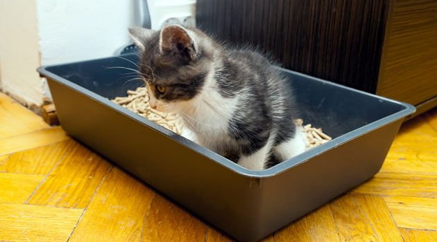 5 Best Types Of Natural Cat Litter How To Choose Reviews Baxter And June Natural Cat Litter Cats Litter Box