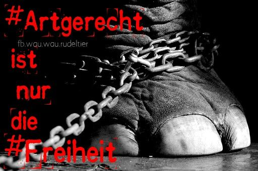 #Artgerecht ist nur die #Freiheit