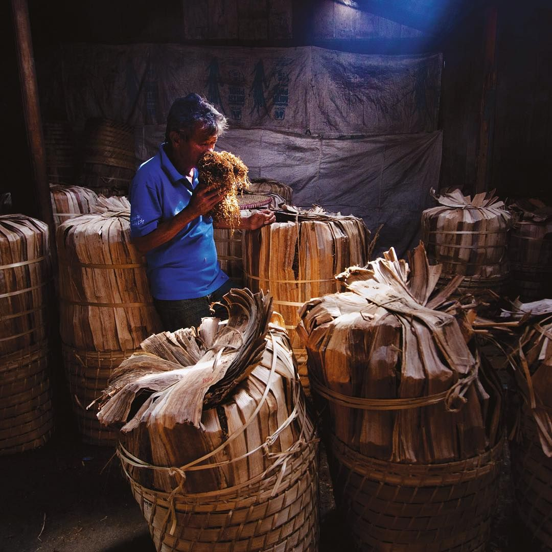 Foto oleh Hafidz Novalsyah @HafidzNovalsyah. Sumar, pedagang tembakau di Pasar Parakan, Temanggung, mencium aroma tembakau dari petani. Seorang grader harus piawai dalam menilai tembakau melalui penglihatan, penciuman, dan sentuhan. Foto diambil dari kisah Riwayat Tembakau yang dimuat di National Geographic Indonesia edisi Desember 2012.  Sahabat dapat mebaca kisah-kisah yang pernah dimuat di majalah dengan mengunjungi tautan yang terdapat di profil kami. #Tembakau #ArsipNGI #NatGeoIndonesia