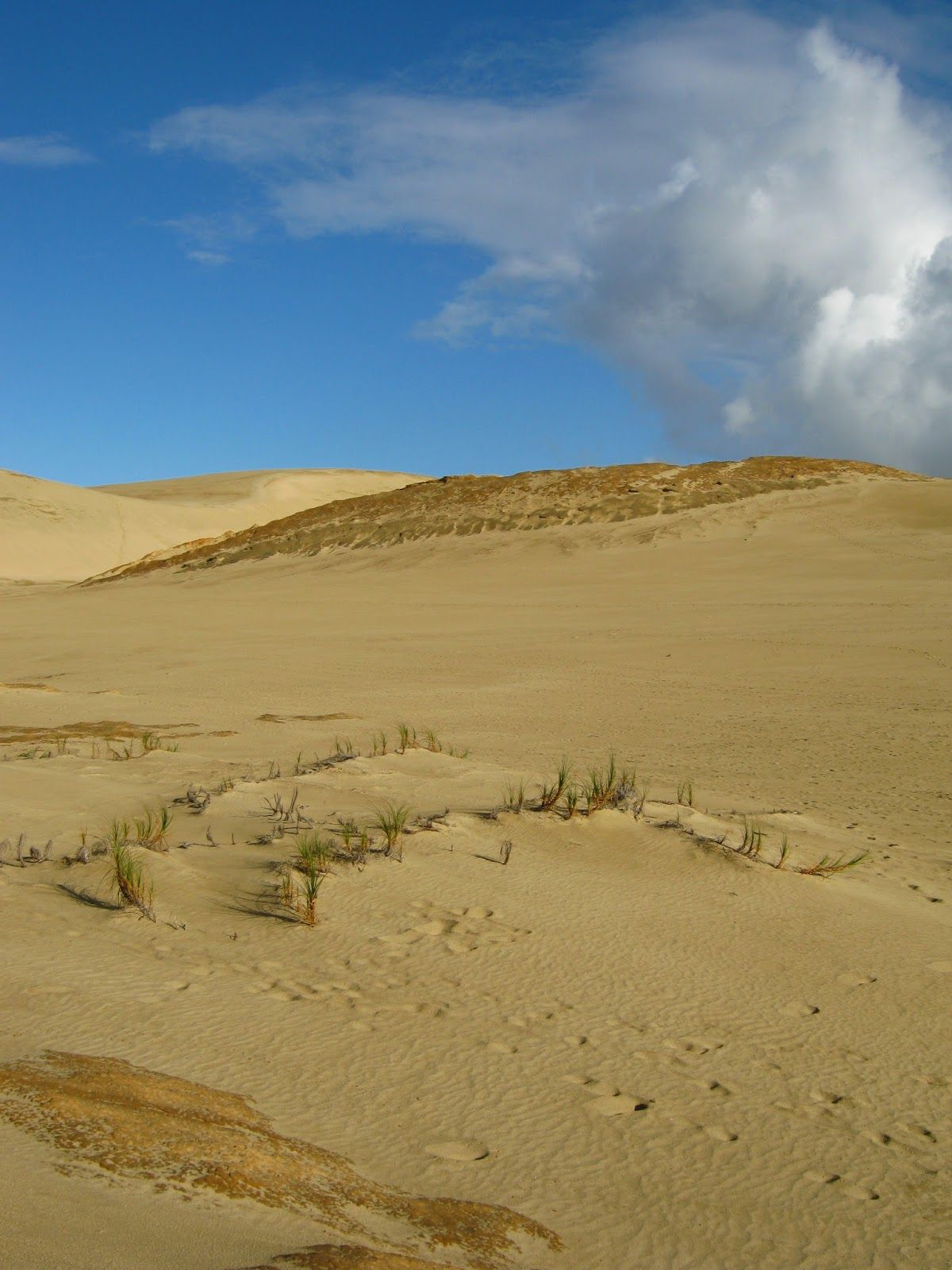 New Zealand Secret Desert