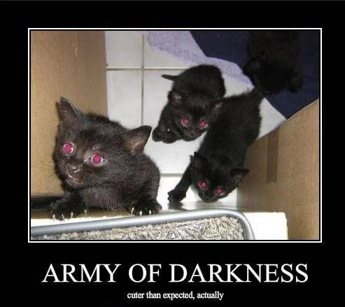 Evil Cat Funny Fail Kitten Evil Cats With Images Evil Cat