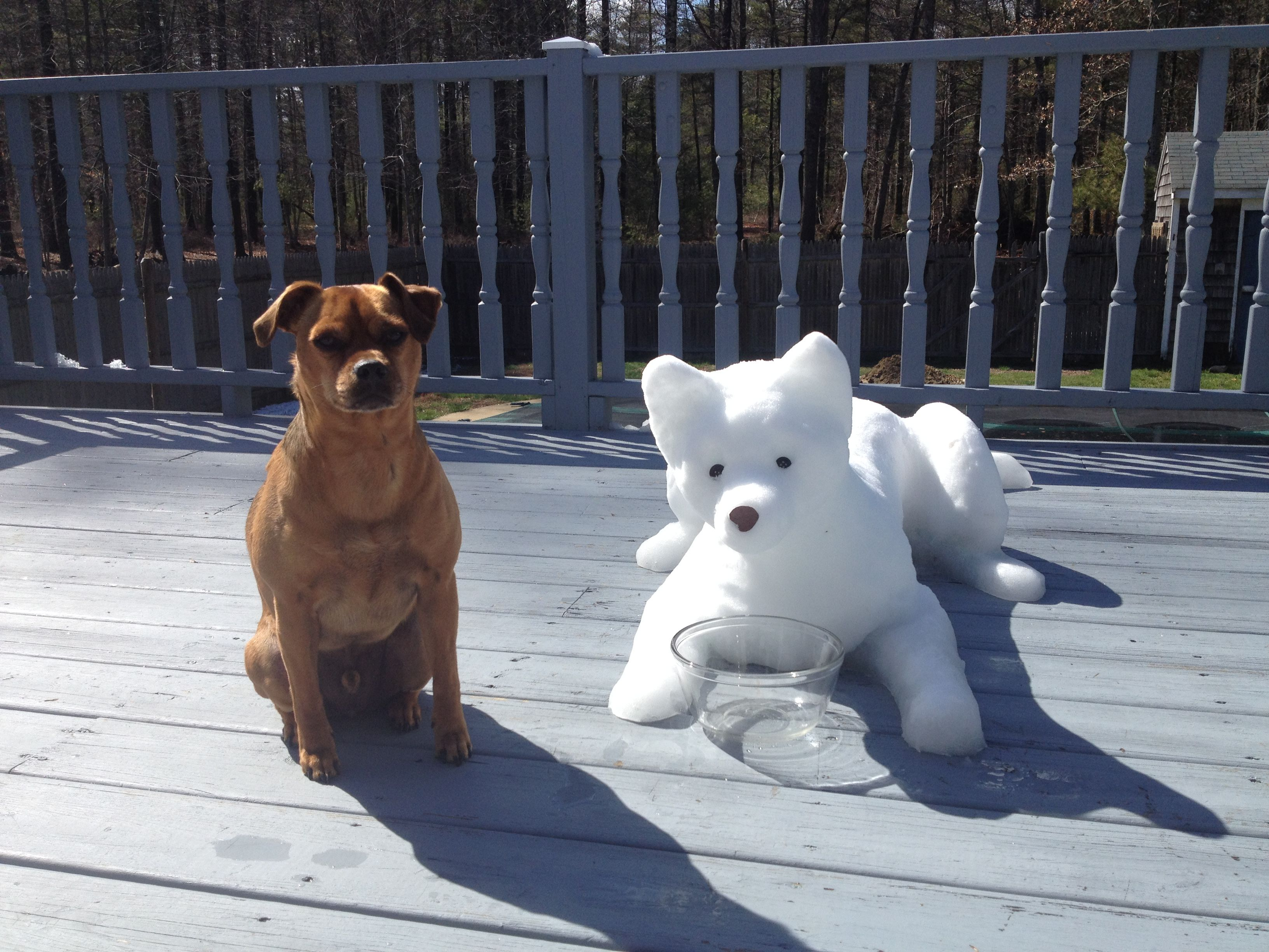 Dog Snow Sculpture By Dawn Gould With Her Dog Buddy Snow Dogs