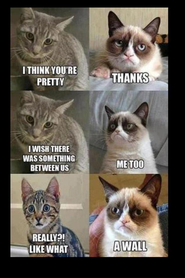 Grumpy Cat Grumpy Cat Humor Funny Animal Jokes Funny Grumpy Cat Memes