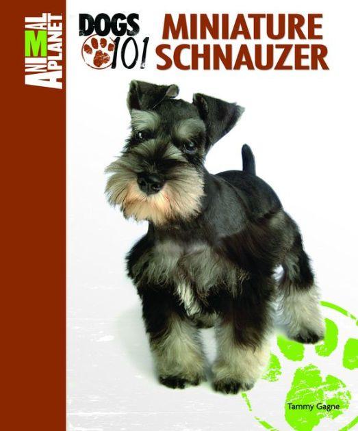 Animal Planet Dogs 101 Miniature Schnauzer By Tammy Gagne Tfh