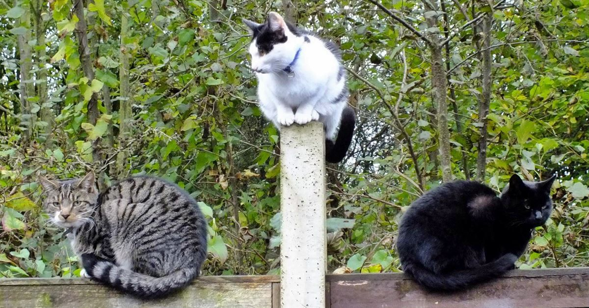 How To Identify Stray And Feral Cats, And How To Help Them