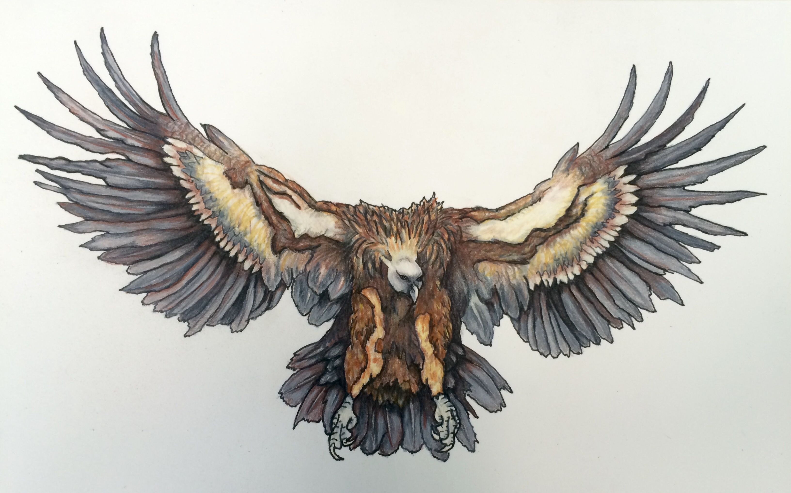 Griffon Vulture Tattoo Design S Lakin Hipster Tattoo Traditional Vulture Tattoo Art Tattoo