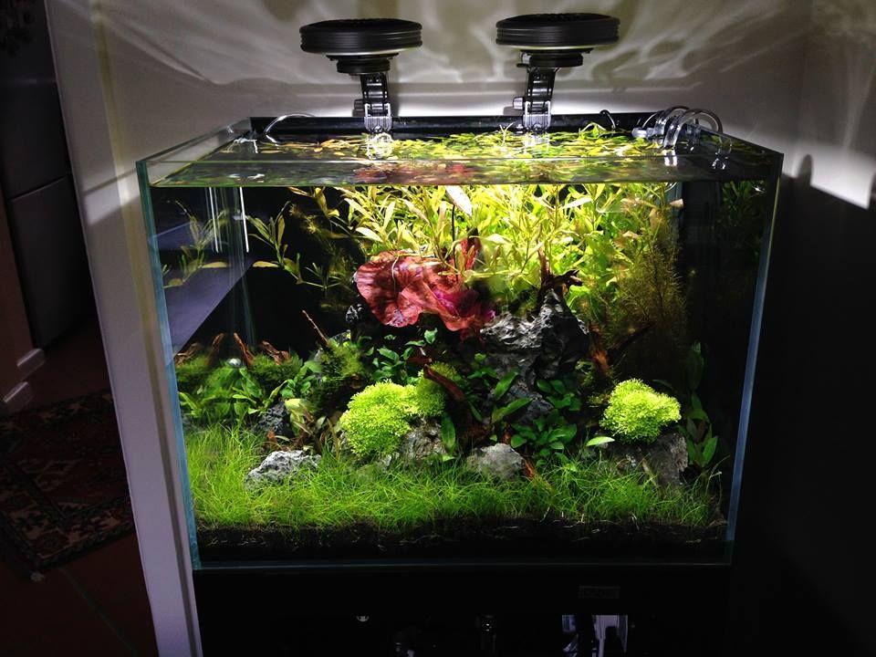 Aquascaping melbourne