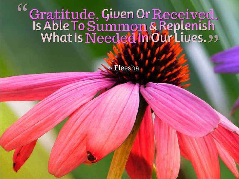 ~ ƸӜƷ•°* #Gratitude, #Given Or #Received *°•ƸӜƷ ~