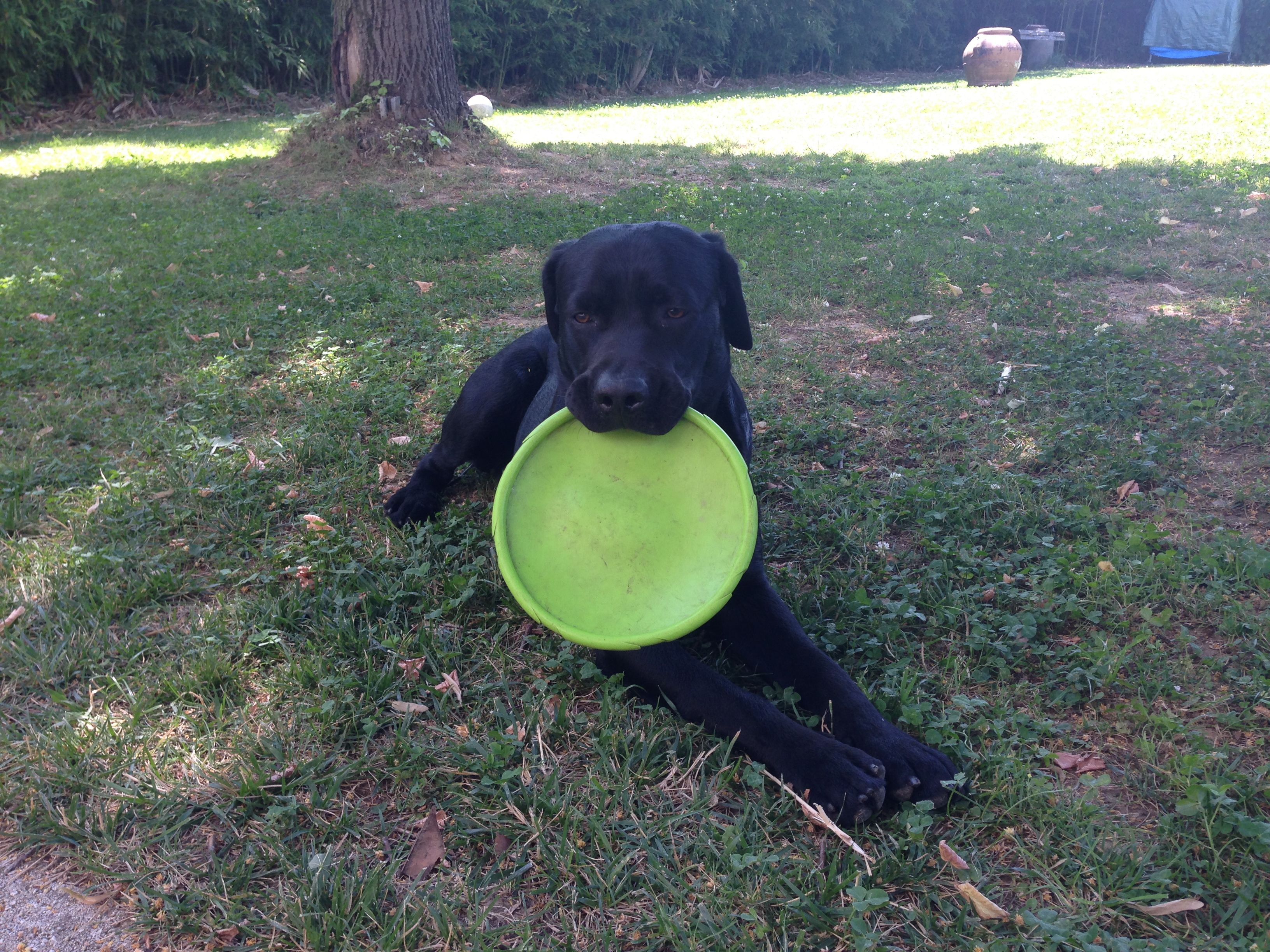 Frisbee is my passion
