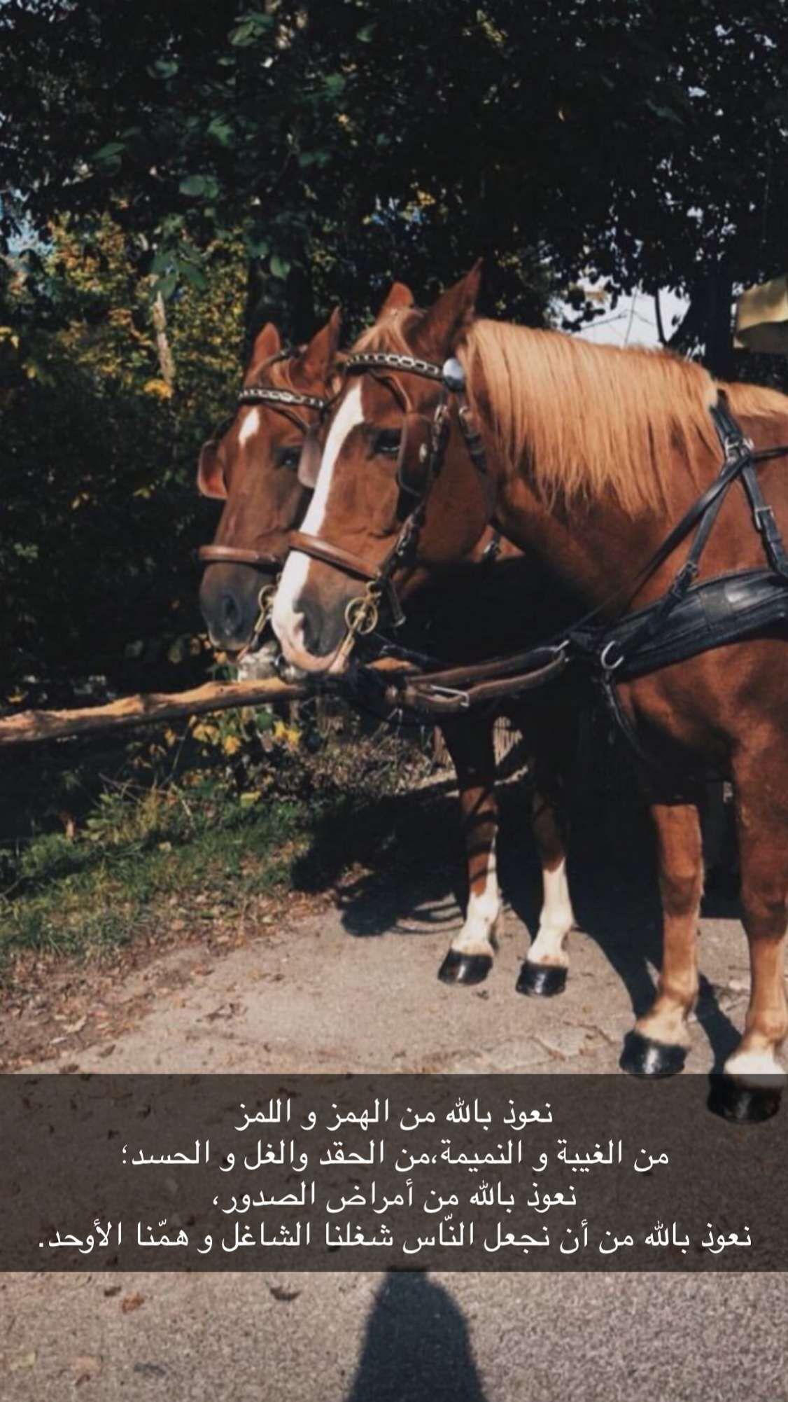 Pin By الوتين On خلفيات دينية Horses Animals