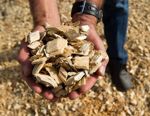 biomass chips