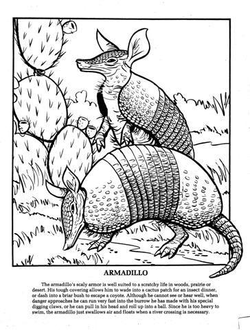 Armadillo Coloring Page Texas Animals Coloring Books Armadillo Art