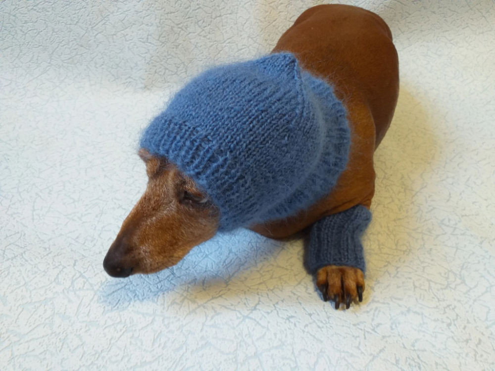 Leggings and hat set for dogs from mohair, leggings and ...
