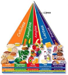 Food Additives | MNF Lifestyle Program | Food, Food industry, Texture