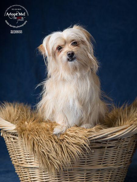 How To Take Creative Pet Portraits Backdrop Express Blog Pet