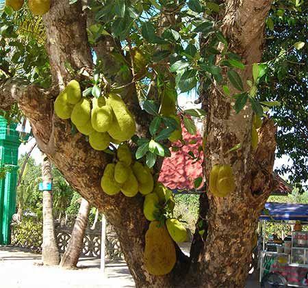 Pin On Exotic Fruit