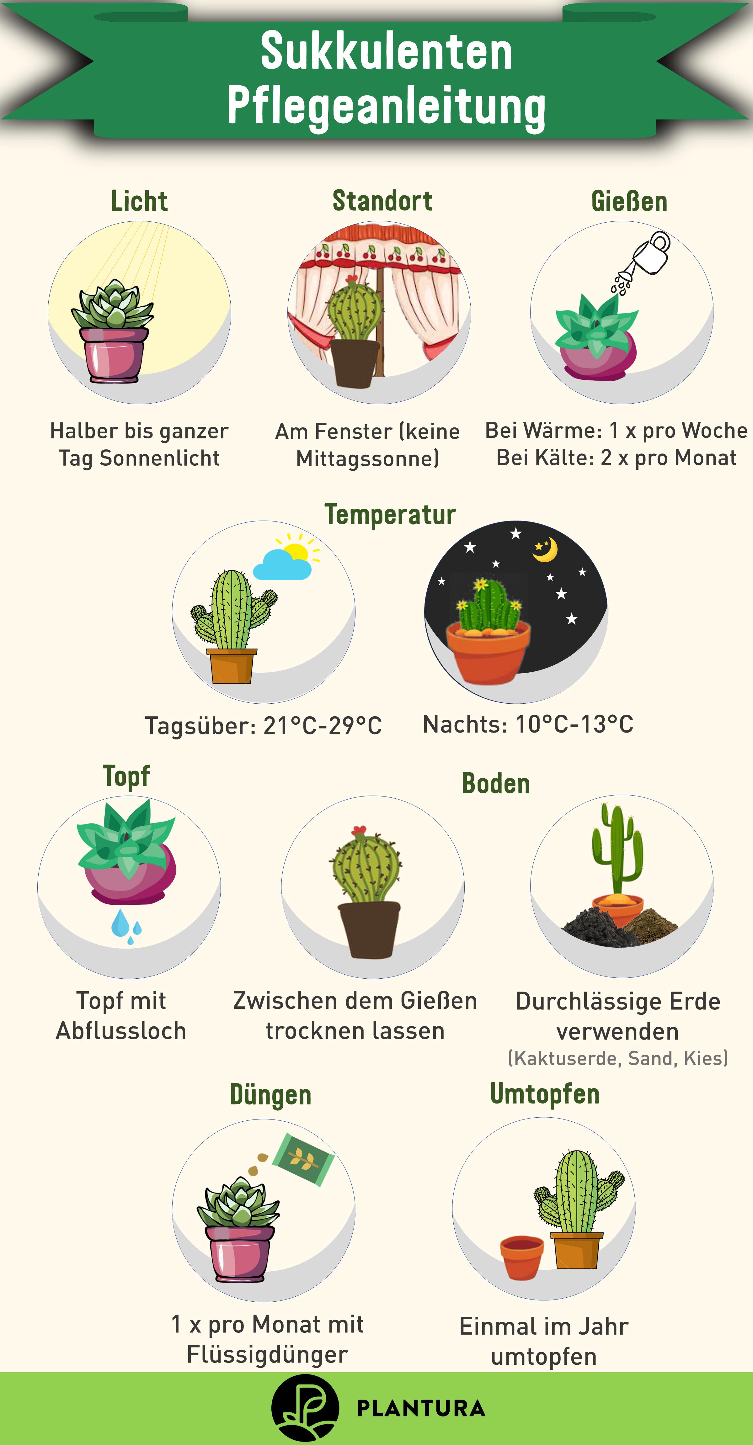 Sukkulenten pflegen: Sukkulenten richtig gießen, düngen & Co. - Plantura