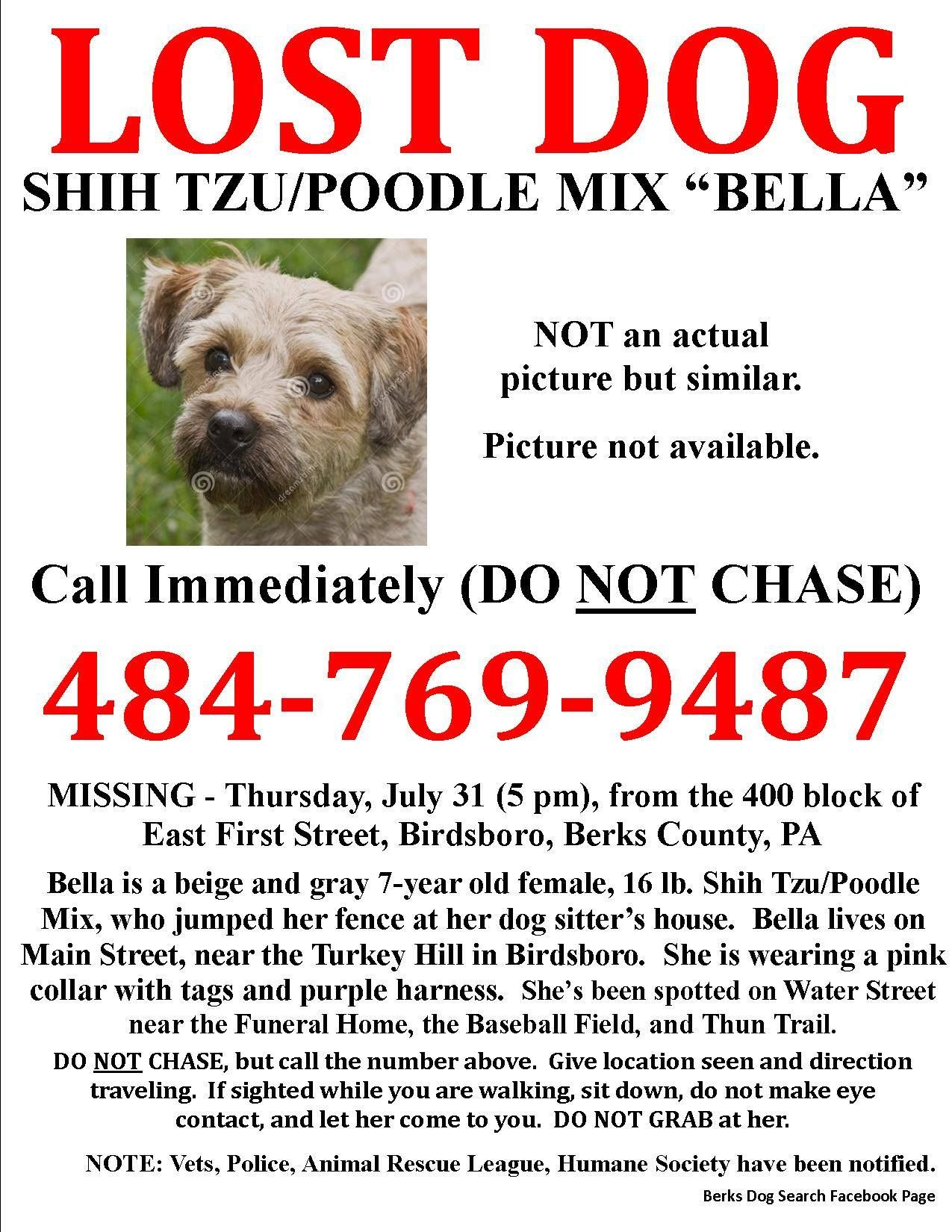 Bella is a Shih Tzu/Poodle Mix who jumped the fence at her