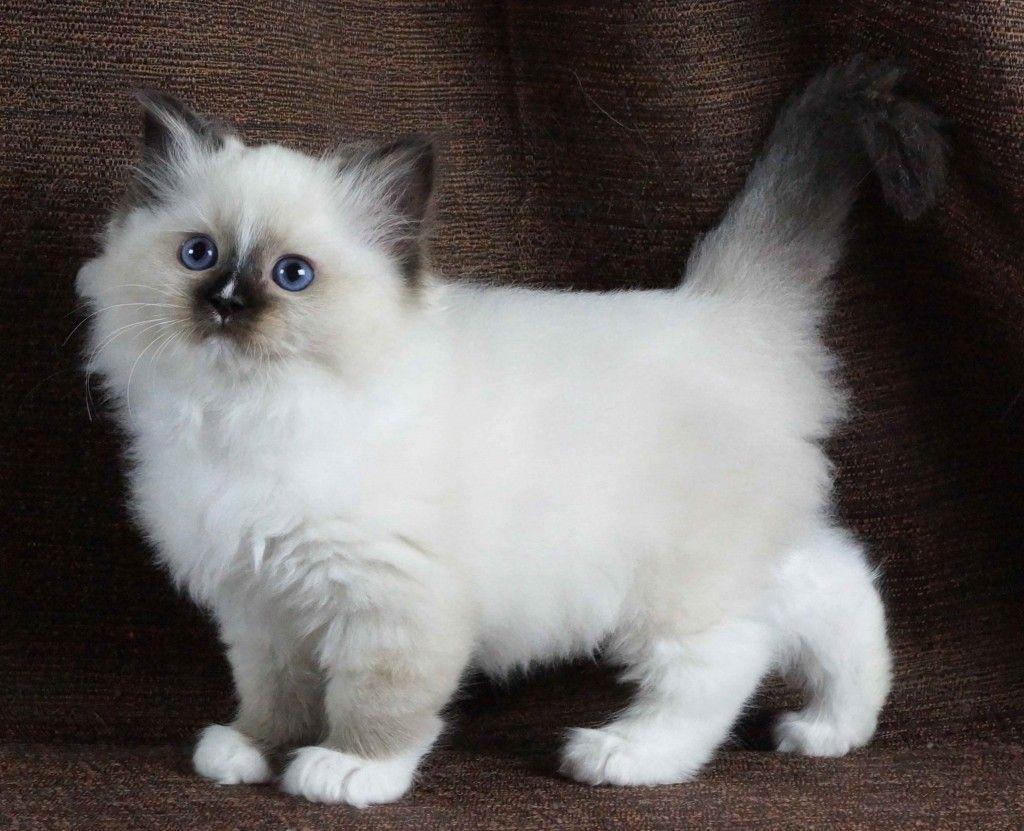 File 3 Week Old Kitten 1 Jpg Wikimedia Commons