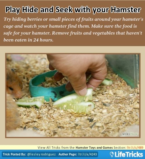 Hamster Toys And Games Play Hide And Seek With Your Hamster