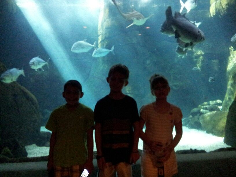 The aquarium is pretty inexpensive. Good activity for the ...