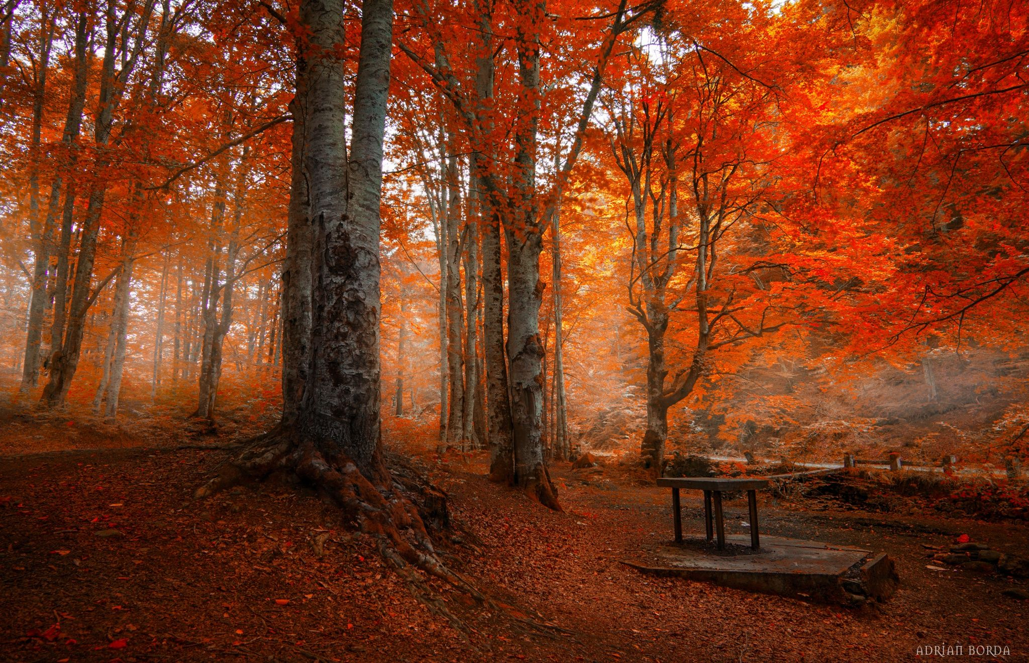 The Age of Wonder by Adrian Borda on 500px