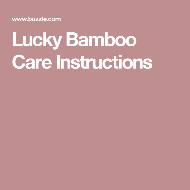Simple Instructions To Provide The Best Care For Your Lucky Bamboo