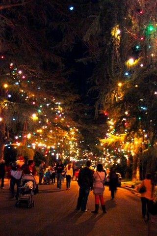 Christmas Tree Lane In Altadena Pasadena Christmas Display Pasadena California