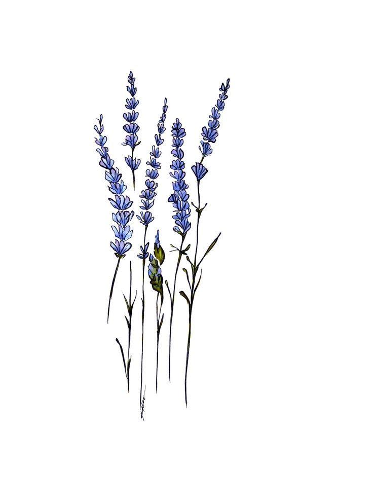 inktober 2018 | Lavender tattoo, Small flower tattoos ... |Lavender Tattoo Outline