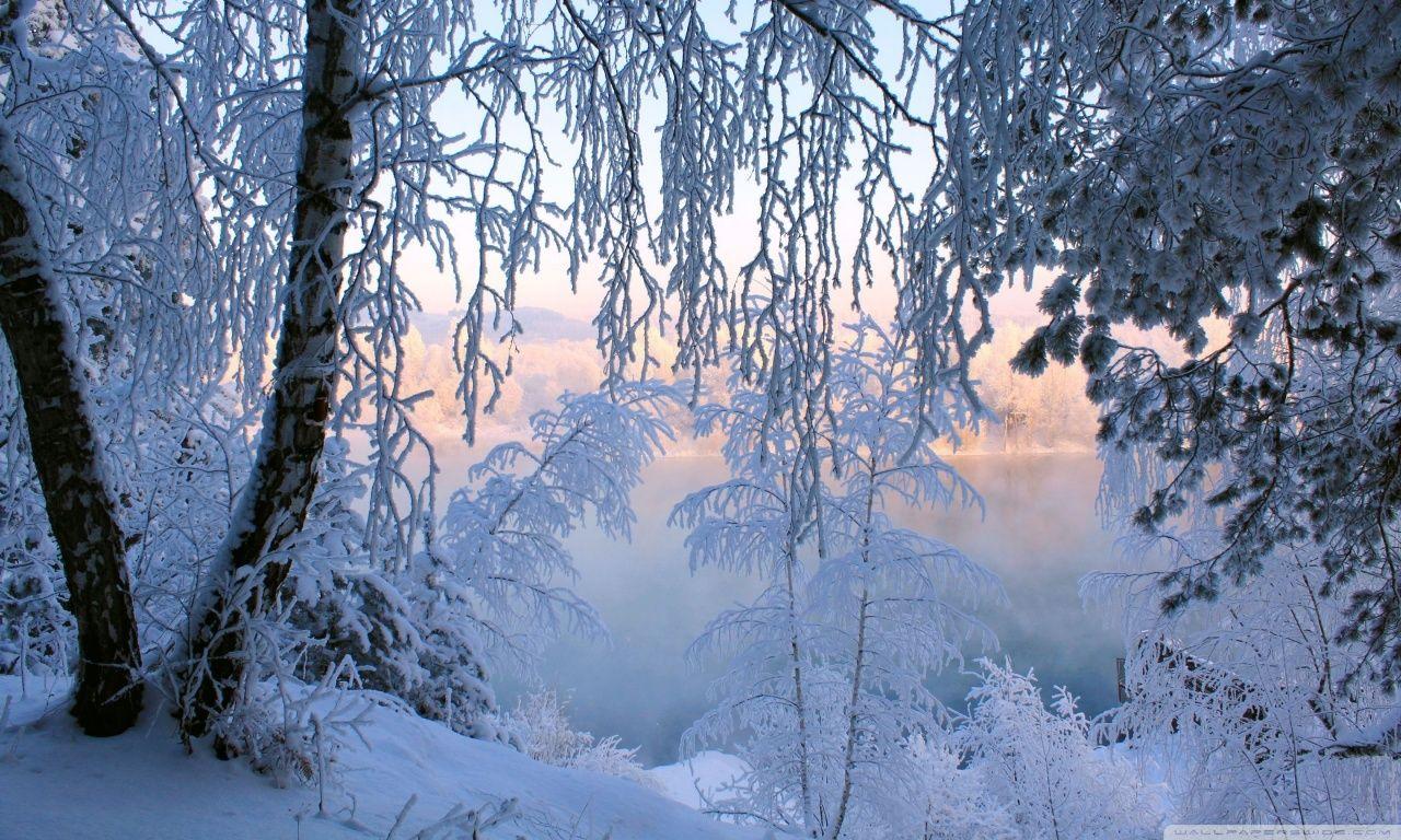Beautiful winter frost hd desktop wallpaper high definition art