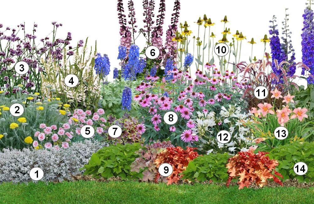 Mixed border 1 c rastium tomentosum 2 achill e 3 for Jardin anglais mixed border