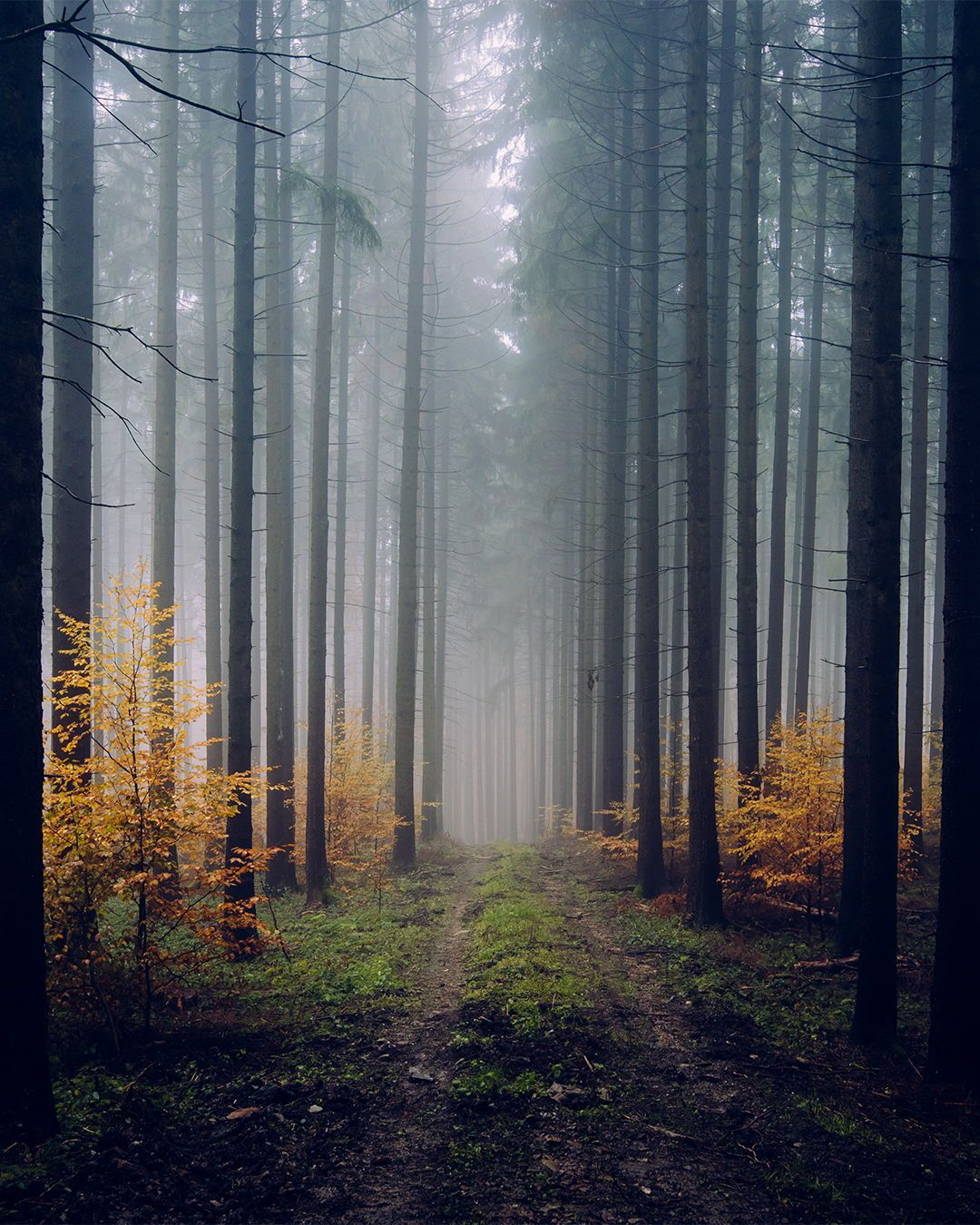 Autumn Forest In Germany In 2020 Fine Art Landscape Photography Landscape Photography Creative Photography Techniques
