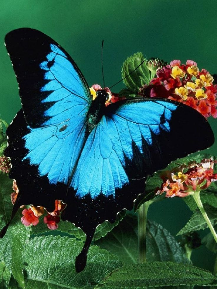 Beautiful Butterfly Pictures And Fun Facts Butterfly Pictures Beautiful Butterflies Butterfly