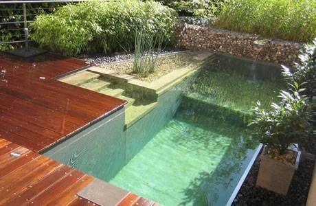 Sustituye el cloro por los peces Piscinas naturales, Piscinas y