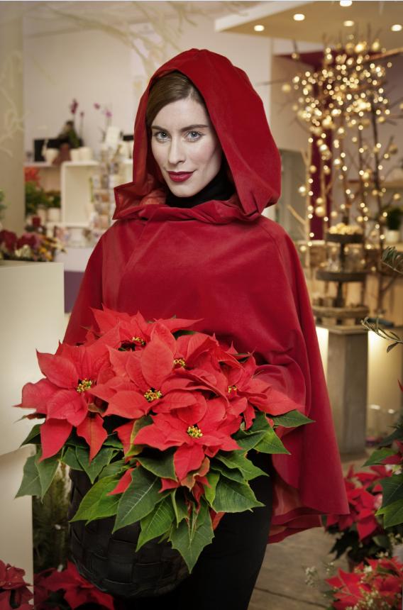 Rotkäppchen mit einem Korb, der mit Poinsettias gefüllt ist. #sfe #mypoinsettia #poinsettia #weihnachtsstern #dekoration #decoration #pflanze #pflanzen #plants #planters #plant #christmas #weihnachten