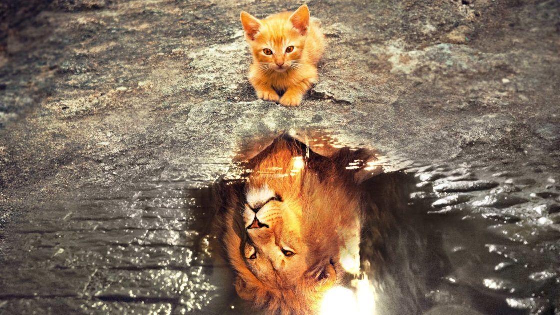 Chat Reflet Cat Reflection Voyage Onirique En 2020 Photos De Lion Animales Fond D Ecran Chat