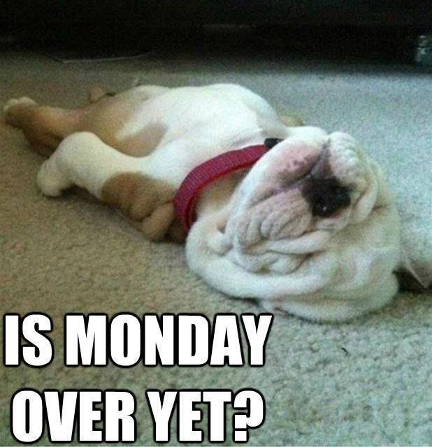 Is Monday Over Yet Funny Quotes Puppy Monday Days Of The Week Humor Monday Quotes Funny Animal Pictures Cute Animals Funny Pictures