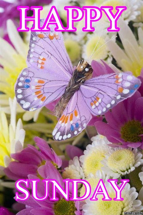 Happy Sunday! Enjoy your day of rest. | Butterfly pictures ...