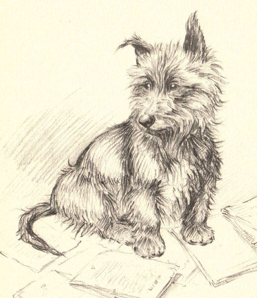 1930s Vintage Cairn Terrier Dog Print Original Antique Puppy Print